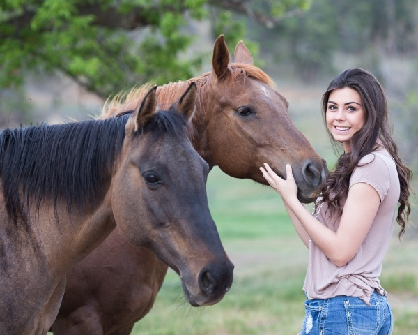 horses-1996285_1280