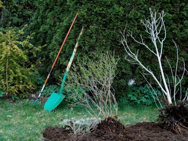 gardening-331668_1920