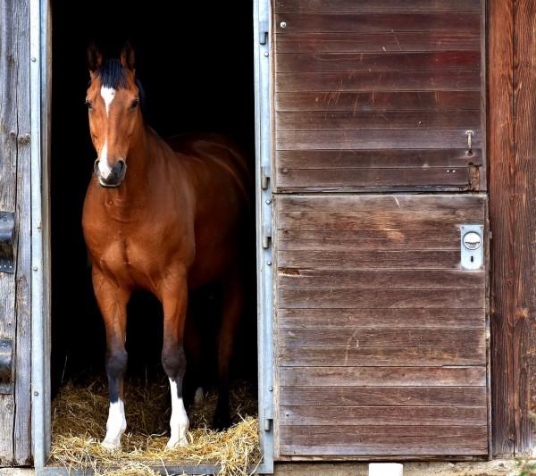 horse-2344193_1280