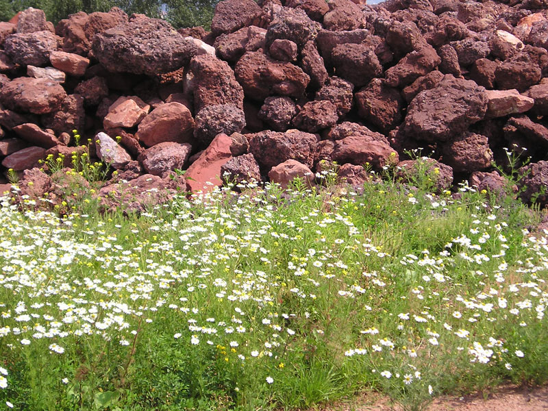 Kräuter, Blumen und Gräser