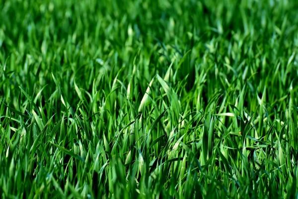 meadow-3375052_1280