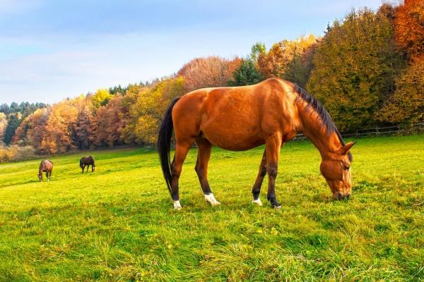 horse-3802776_1280
