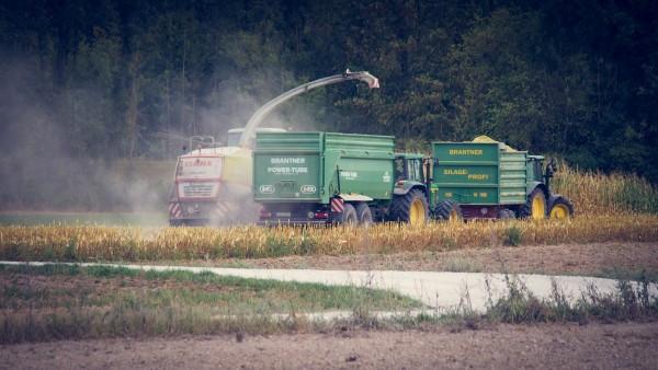 corn-harvest-3710974_1920