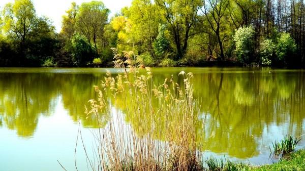 lake-5030811_1280